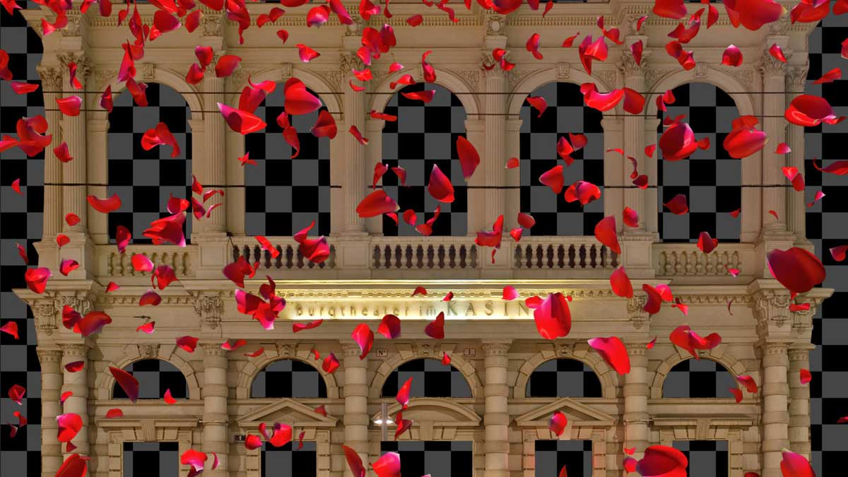 Falling-Rose-Petals